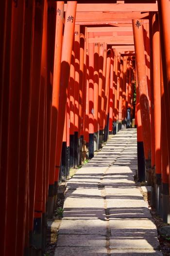 先ほどの社殿の西側にある「乙女稲荷神社」に向かう途中の千本鳥居。北から南に通り抜けると邪気が払われると言われています。社殿周辺はお詣りをする方が多いのですが、この鳥居周辺は静かで、厳かな空気に包まれています。
