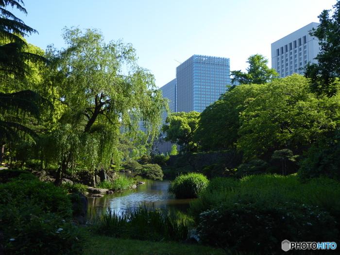 日比谷公園のある場所は、江戸時代は大名の屋敷地でした。堀が江戸城に連なっていたこともあり、その名残が「心字池」に残っています。ビルに囲まれたエリアで自然豊かなスポットがあるのは、心癒されますよね。