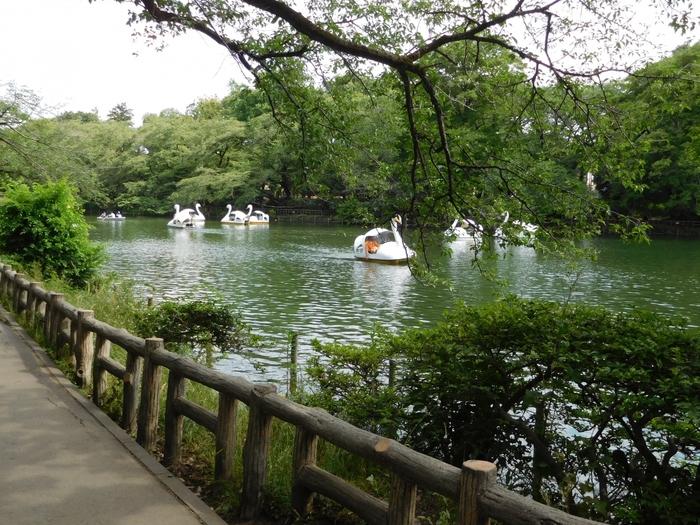 ローボート、サイクルボート、スワンボートに乗るのも楽しみのひとつ。暑い日でも池の上はとても涼しく、心地よい時間が流れます。