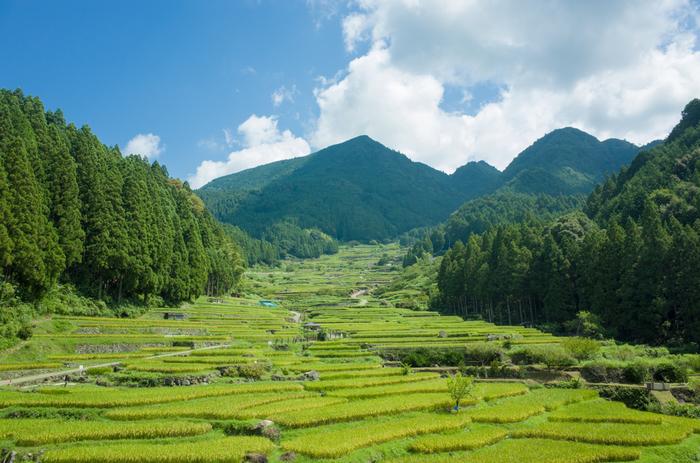 起源から約400年の歴史を持つ四谷千枚田は、どこか懐かしい佇まいをしています。鞍掛山の山頂へ向けて延々と続く棚田を眺めていると、まるで日本昔話の世界に迷い込んだかのような錯覚を感じます。