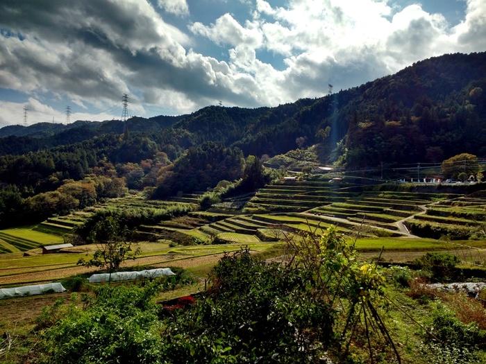 四季折々で美しい景色を見せてくれる坂折棚田の歴史は古く、現在から約400年前の戦国時代から江戸時代初期にかけて築かれたものです。
