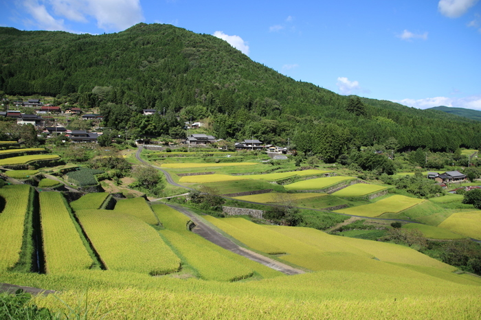 標高約620メートルから446メートルの位置にある坂折棚田の畦は石垣でできており、周囲の美しい農村風景と見事に調和しています。