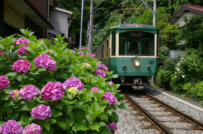 たくさんの観光客が訪れる、神奈川の古都「鎌倉」。なかでも《長谷》エリアは、紫陽花の名所「長谷寺」や、高徳院の「鎌倉大仏」など、名所が集う人気のエリアです。