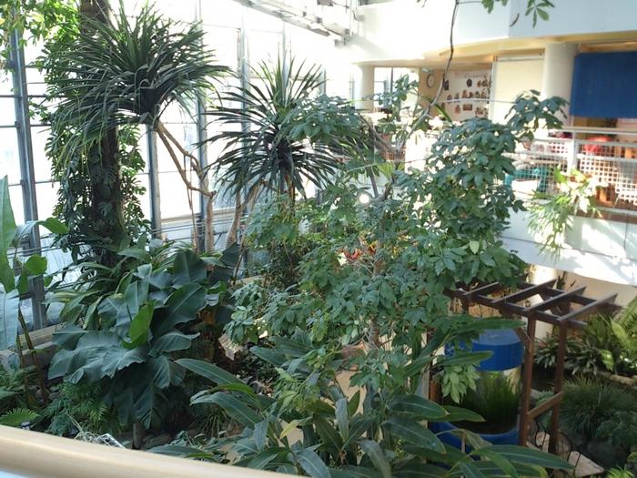 中は一部が温室になっており、熱帯植物など数多くの植物を見ることができます。大人は入場料100円、未就学児は無料なので、気軽に立ち寄ることができますね!