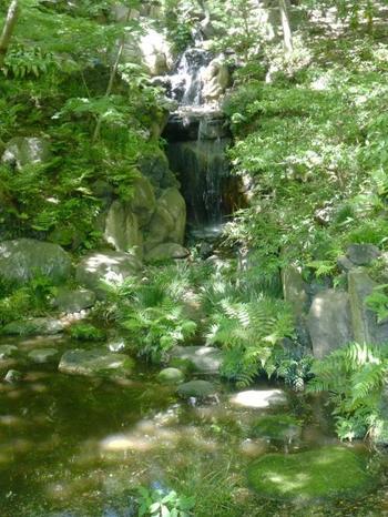 こちらは「大滝」。園内で最も勾配の急な箇所を削って断崖とし、10数メートルの高所から落ちる水音に涼を感じます。小川治兵衛氏がもっとも力を注いだとも言われるこの滝は、暑い日こそ訪れたいスポット。