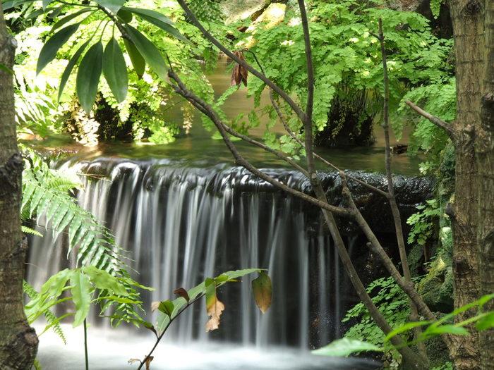 東南アジアの熱帯林や山地植生が再現されていて、館内ガイドツアーも行なわれています。植物の種植えなどの体験イベントが行なわれることも。