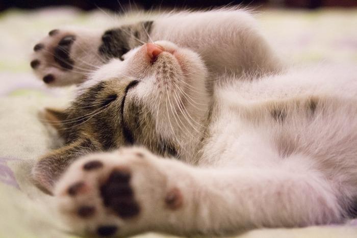 まずは、ペットが動かない、寝ている姿を撮影してみましょう!動かないから撮りやすいのはもちろん、動物の寝顔はとっても可愛いですよね。特に猫ちゃんは寝ていたりじっとしてることのほうが多いかも。ここまでにご紹介した「目線を合わせる」「構図を意識する」などのポイントを押さえながら撮影してみましょう。