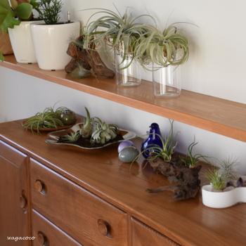 グリーンもお花と同様、ほんの小さなものでもかまいませんし、比較的世話のしやすいエアープランツなどもありますので、好みや生活スタイルに合ったものを見つけてくださいね。