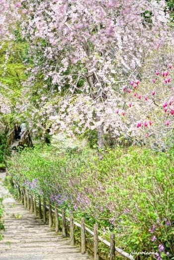 桜の季節には薄いピンクが可愛らしい桜小道を歩くのもいいですね。