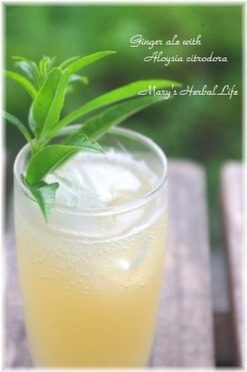 夏のハーブ、レモンバーベナを加えたすがすがしい風味のジンジャーエールシロップ。レモンバーベナは、フレッシュでもドライでもOKです。
