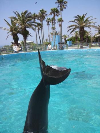 イルカやアシカのショーもあります。元気に泳ぐイルカたちに元気をもらえますよ♪