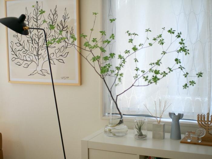 背の高い観葉植物を置きたいけれど、スペースの都合で手が出せない。でも存在感のあるグリーンをお部屋に置きたい。そんな方におすすめなのが、お花屋さんで生花として売られている「枝もの」です。花瓶にさっと生けるだけでサマになるうえに、家の中にいながら季節を感じるという贅沢も味わえます。