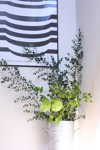 丸い葉がかわいらしい、マットな質感のユーカリ。通年出回っており、生花が少なくなる夏や冬に重宝します。フレッシュのまま吊るしておけばドライにもできる、定番のグリーンです。1本を小分けにして楽しんでもいいですし、複数本でボリューム感のあるインテリアとして楽しんでもいいですね。