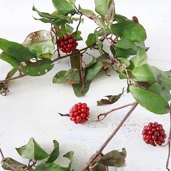 実りの秋というように、秋の枝ものは、たわわに実った「実もの」が主流になります。赤やオレンジ、黄色など、見ているだけで自然の恵みを感じられるのが魅力です。冬の枝ものは、クリスマスやお正月に華やかさを添えるものが多くなります。そのままドライになるスワッグやお飾りなどに使える種類が豊富なのもこの時期ならでは。