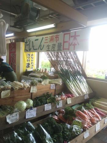 2階には新鮮とれたて野菜コーナーがあります。キャベツや大根をはじめ、土壌に恵まれた三浦の野菜は栄養価も高くみずみずしくてとっても美味しいんです!お値段もお安いのでオススメですよ。