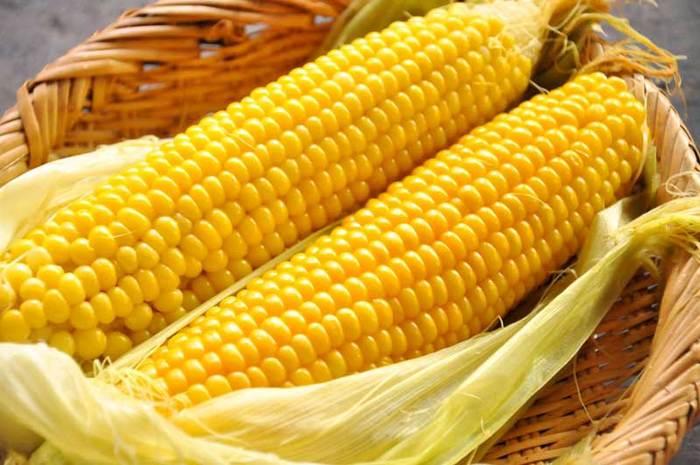 16世紀頃に長崎に伝えられたといわれる「とうもろこし」は、甘くてジューシーな味わいが特徴。ビタミンBや食物繊維など栄養が豊富で、世界三大穀物のひとつでもあります。皮が濃い緑色で粒が大きくしっかりと詰まっているものを選びましょう。