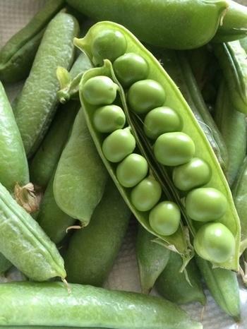 グリーンピースは、一粒一粒は小さいですが、たんぱく質やビタミンB1など栄養たっぷりで、特に食物繊維は野菜のなかでも多いのが特徴です。保存する際は、乾燥から守るためにビニール袋に入れてから冷蔵保存しましょう。また塩茹でして冷凍保存しておくと、料理の彩りやアクセントに使いたいというときにも便利!