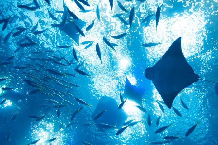 水族館もおすすめです。水の中をゆったりと泳ぐ魚たちを見ていると、なんとなく気持ちがおおらかに凪いでいくのを感じます。水の中の景色はとても幻想的で、じっと見ていると自分も水の中にいるような感覚に。時が過ぎるのを忘れて見入ってしまいそうです。非日常の別世界へ身を置くことが、とても心地良く感じられます。