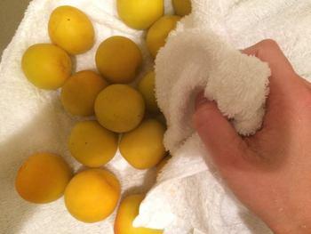 きれいになった梅の実は、清潔な布巾の上などに並べて水気を拭き取っていきます。ヘタのあたりは特に水分が残りやすいので注意しましょう。 梅干しも梅シロップやジュースも、ここまでの工程は共通です。実に穴を開けたりといった小さな違いはありますが、この下ごしらえのアレンジと思えばカンタン! では、この梅を使って梅干しを漬ける方法をご紹介します。