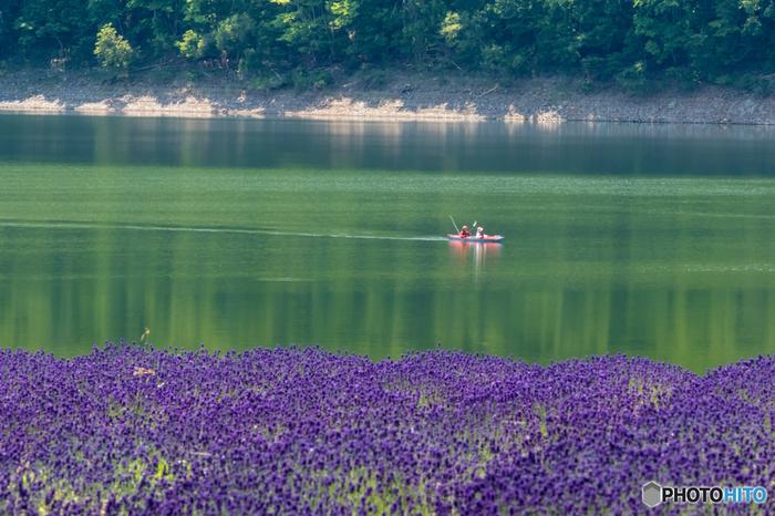 北海道有数のダム湖である「かなやま湖」では、湖畔にラベンダー園が広がっています。他のラベンダースポットは基本的に内陸なので、このように水の風景とラベンダーの共演を楽しめるのは貴重かもしれません。
