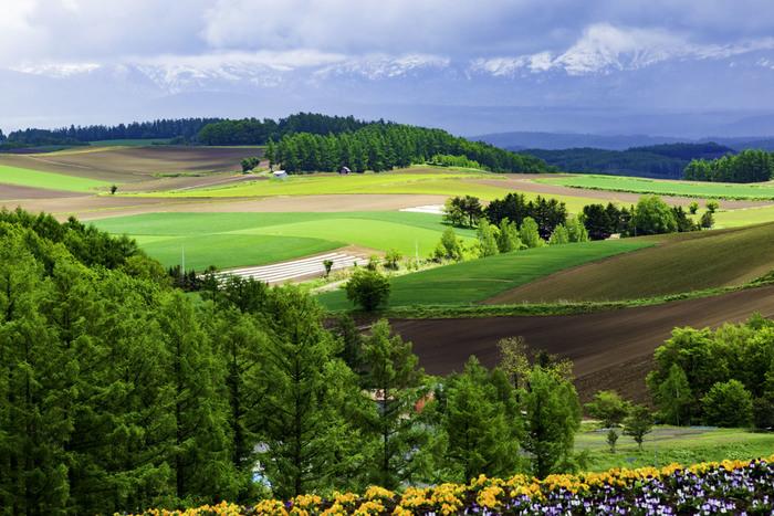 花畑だけでなく、野菜などを栽培する農場や、アルパカ牧場やペンションなどの施設も。こんな風景の中で目覚める朝は、とても気持ちがよさそうです。