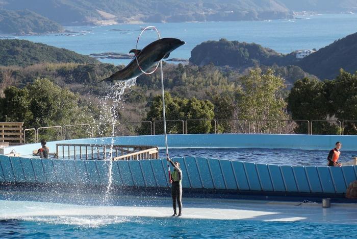 パンダの他にも「アドベンチャーワールド」には人気者がたくさん。和歌山の海を背景に繰り広げられるダイナミックなイルカのショーも見どころの一つです。