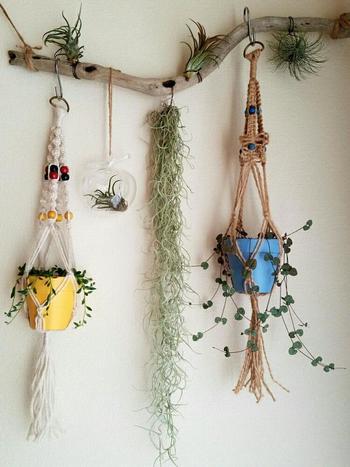 マクラメ編みのプラントハンガーを流木に吊るして壁をナチュラルにデコレーション。自然そのままの形を生かして飾ってみましょう。