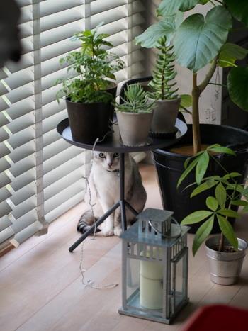 天板がトレイ型になっているので植物置き場としてもぴったり。陽当りの良い場所への移動も簡単です。