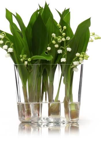 茎や葉がしっかりした植物はその直線の感じを、ベースで上手に見せてあげるのも素敵。ベースいっぱいに生けたスズラン。力強い生命力を感じさせる葉っぱの緑と円らでかわいらしい花弁の白。とても表情豊かですね。