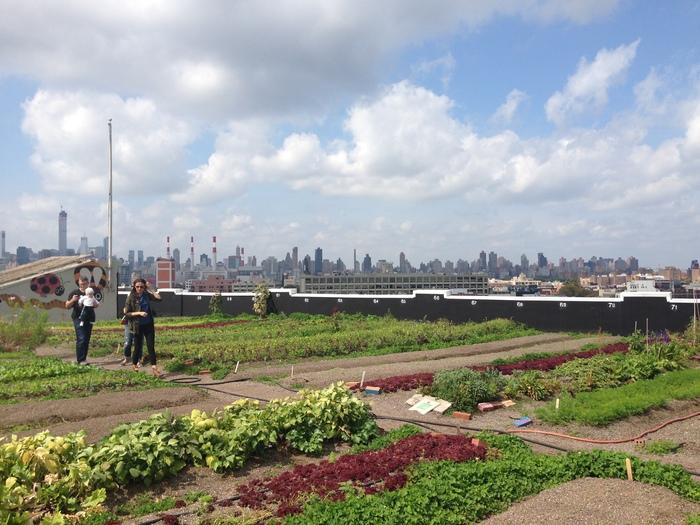 こちらは、ブルックリンにある世界最大規模と言われる屋上農園のBrooklyn Grange。マンハッタンを一望出来る、空に手が届きそうな屋上農園では、約40種類以上のオーガニック野菜が育てられています。ここで採れた野菜は、NYの地産地消化を目指し、地元のレストランや定期的に個人にも販売しているのだそう。
