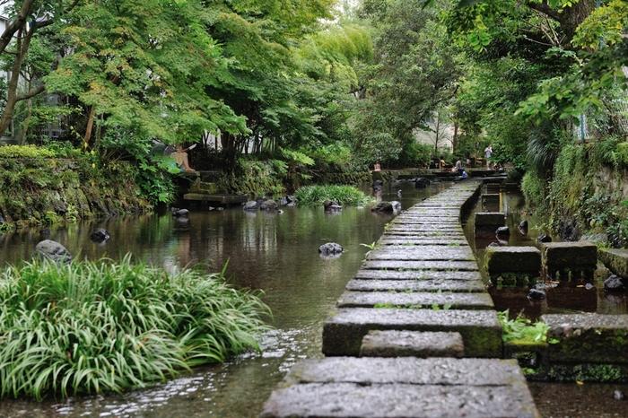 水の都といわれる三島の散歩道には、源兵衛川がおすすめです。市街を流れる富士山の湧き水。清く澄んだ水辺を歩くだけで、心が洗われるよう。時間があれば、三島駅から徒歩5分でいける「楽寿園」にもぜひ行ってみてください。