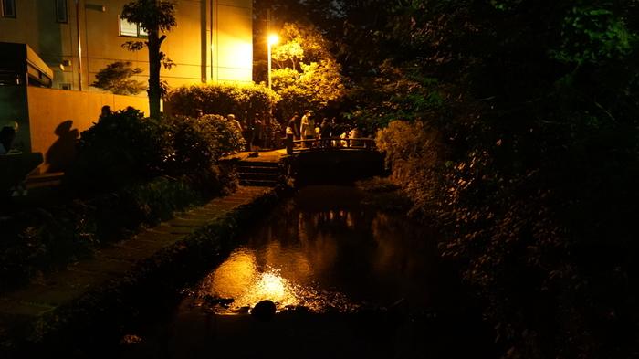 源兵衛川はホタルが鑑賞できるスポットとしても人気です。鑑賞時期は、5月から6月中旬頃。