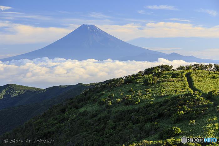 雄大な富士山と広がる海を目の前にしながら花々を鑑賞できるのは、静岡のこの地ならではの贅沢です。雨が降っても、伊豆の充実した魅力は減りません。 伊豆に行ったことがあるという人も、今度はあじさいの時期に旅をしてみるのはいかがでしょうか。