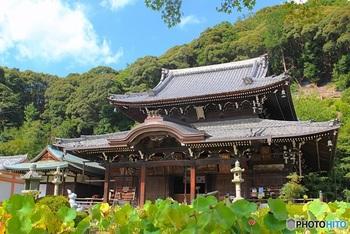 西国三十三ヶ所巡礼の十番札所としても知られる「三室戸寺」は、京都府宇治市にある約1200年前に創建されたと伝えられる歴史あるお寺で、京都のあじさい寺と呼ばれ、つつじや蓮など四季折々のお花が楽しめるお寺としても知られています。