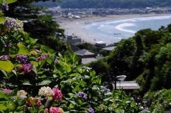 由比ヶ浜を眼下に見ながらアジサイも一緒に見る事ができる、まさに鎌倉を代表するアジサイの名所です。