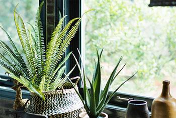 小さなかごをプランターポットカバーとして利用しています。植物と天然素材は相性抜群ですね。
