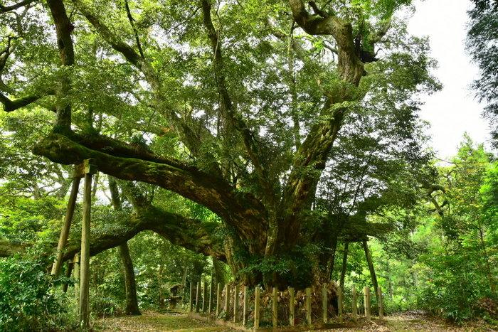 お寺や神社なども、心を鎮めてくれる緑がある場所です。何百年もそこに佇んでいる神木からは、生命のエネルギーを感じずにはいられません。寺院独特の静謐な空気や、無限の宇宙を感じるような禅寺の庭園などを眺めて「無心」になれる時を体験してみて。