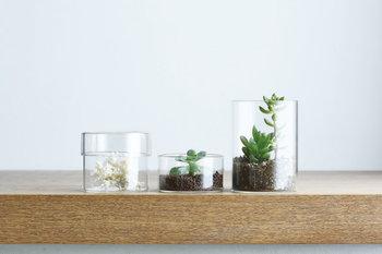 理化学用品のシャーレのような耐熱ガラスのケース・SCHALE(シャーレ)。繊細な佇まいで中に入れるものを美しく見せてくれます。