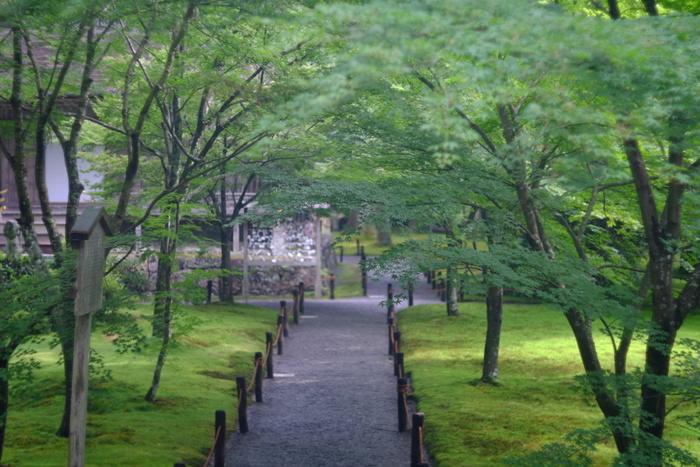 この時期、京都でのもうひとつの楽しみ「青もみじ」とも呼ばれる深緑は、あじさいと同じ頃にグリーンがとてもきれいな時期を迎えます。紅葉でも有名な三千院ならではの深緑の世界は、時間を忘れてしまいそうなほど。
