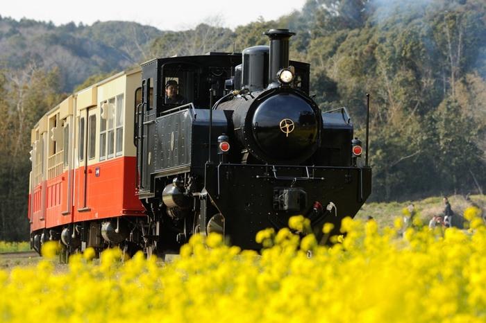 「トロッコ列車」は、車体の上半分が外気に開放された車両のことで、そこに旅客が乗車することができる観光列車の通称のこと。 「トロッコ列車」の「トロッコ」というのは、土砂や鉱石を運搬するための簡易な貨車のことなんだそうです。 ここからは、全国各地にある「トロッコ列車」が楽しめるスポットをご紹介したいと思います。今度の休日に、もうすぐ迫る夏休みに、友人やご家族と出かけてみませんか♪