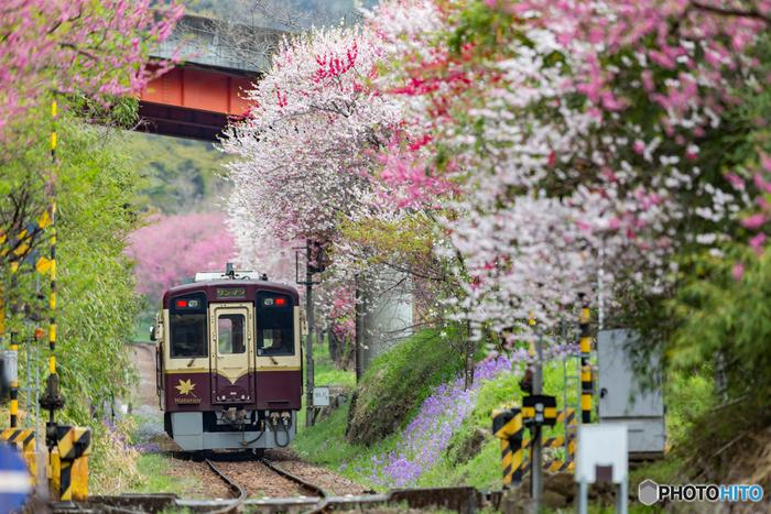 """群馬県の桐生駅と、栃木県の間藤(まとう)駅を結ぶ全長44.1キロの「わたらせ渓谷鐵道」は、廃止となったJR足尾線を引き継いき開業した第三セクター鉄道です。観光シーズンには、美しい自然を満喫できる、レトロな「トロッコ列車」が運行しています。この「わたらせ渓谷」の旅で紹介したいのが""""途中下車""""して楽しめるスポット。"""