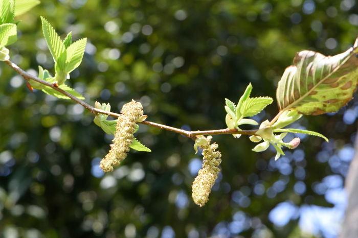 6月に開催されるのは「桑とヤシャブシを使った草木染め体験」です。植物についての理解が深まりますよ。 ※こちらの体験には参加費がかかります。(画像はイメージです)