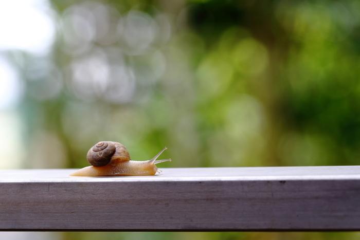 7月に「植物と昆虫のせめぎあいと木の上に棲むカタツムリの話」という講座が緑と水の市民カレッジで開催されます。昆虫とカタツムリについて、専門家の話をじっくりと聴くことができます。 (画像はイメージです)
