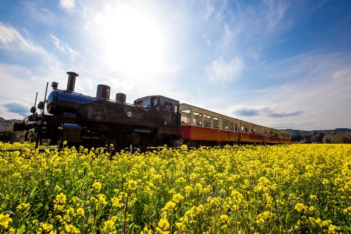 菜の花が咲く頃の車窓からの眺めは、圧巻! 青い空と黄色い絨毯のコントラストが実に美しく、いつまでも心に残る情景となりそうです。 特に、美しいと言われているのが、終点の養老渓谷駅近くの菜の花畑。この一帯は「石神名所なの花畑」と呼ばれ、春の菜の花のシーズンには大勢の観光客やカメラマンが訪れるスポットとなっています。終点の養老渓谷駅からも歩いて15分程なので、歩いて散策されてみてはいかがでしょうか。