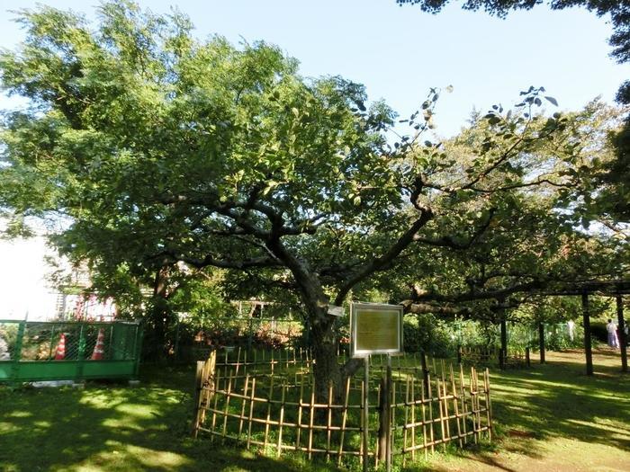 なかでもチェックしてほしいのが、「ニュートンのリンゴ」。 そう、物理学者・ニュートンが「万有引力の法則」を発見するきっかけとなったと言われる、あのリンゴです。その有名なリンゴの木が接ぎ木して増やされ、昭和39年、日本にイギリスから贈られたものが、ここに植樹されました。 あなたもこの木の前に立てば、すばらしいアイデアや発見を得られるかもしれませんよ。