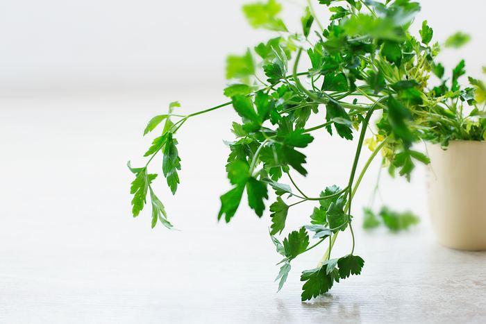 イタリアンパセリは平らでギザギザの形をした葉が特徴的。サラダやスープにしたりバターやオイルと混ぜたりと料理に幅広く用いられます。