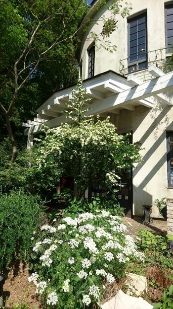 春夏には美しいバラが咲き誇ります。スイーツはもちろん、ガーデン目当てに訪れるのもおすすめです。