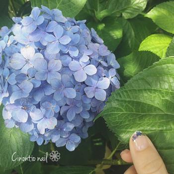 爪の先だけに紫陽花を乗せれば、おしゃれな変形フレンチの完成♪いつもとは違うフレンチネイルにしたい方にぴったりです。透明感があるのでオフィスシーンにも◎。少し濃いめのブルーをセレクトすると、手先がキュッと引き締まります。