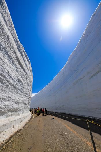 室堂平の周辺では、高さ約15メートルの雪壁が道路の両横にそびえる「雪の大谷」があります。この雪は、冬に降り積もった雪が解けずに残っているもので、圧倒的な存在感を放っています。