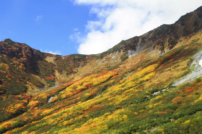 晩秋になると、大観峰からは紅葉した周囲の山々を臨むことができます。山肌を覆う樹々が色とりどりに染まる様は、まるで山肌に鮮やかな絨毯を敷き詰めたかのようです。